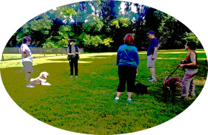 Group dog training classes are a good way to train your dog